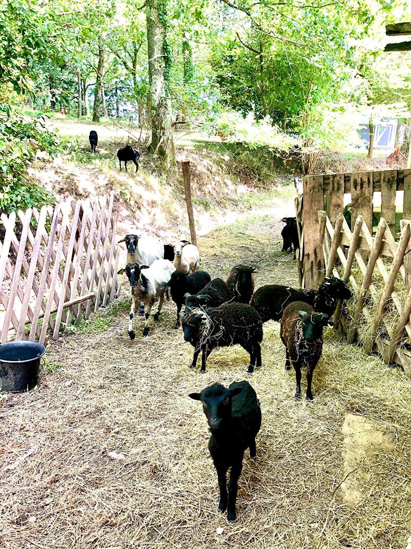 eco-paturage au pays basque