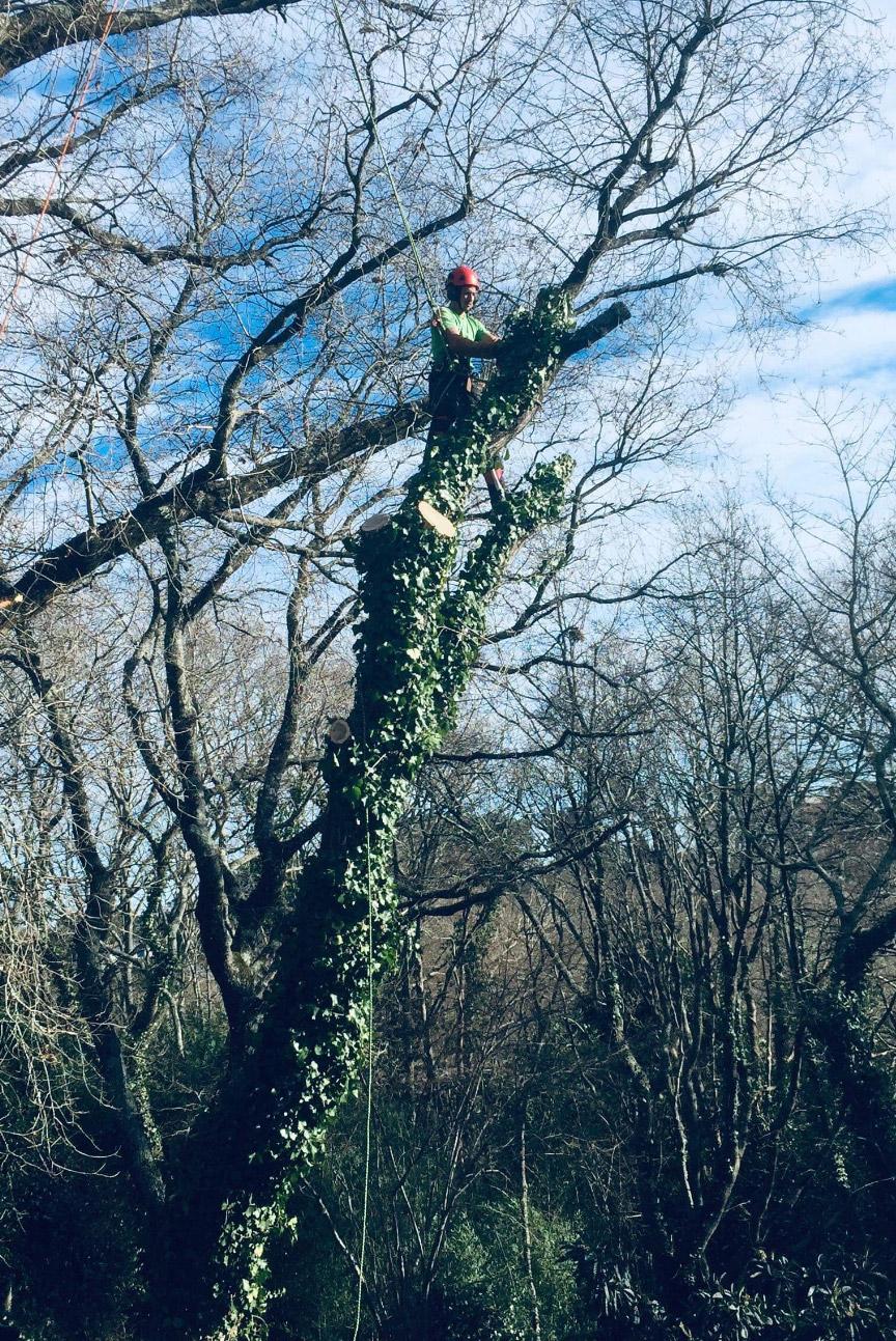 taille des arbres pays basque