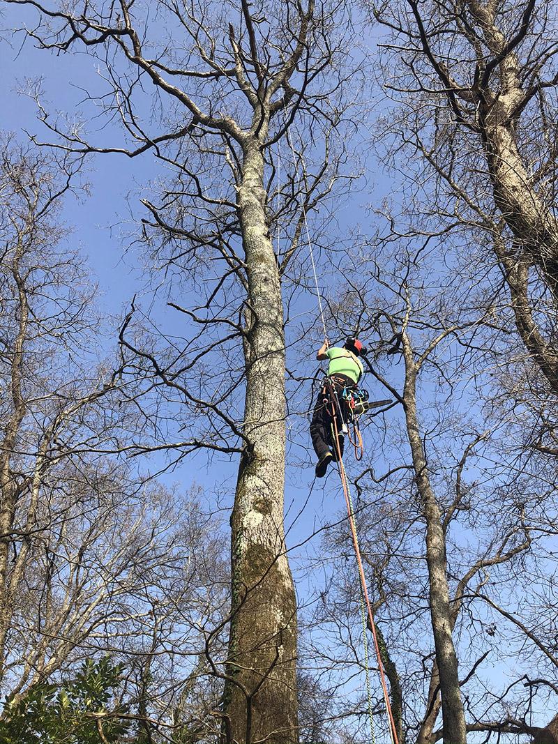 Taille des arbres et abattage à Bayonne